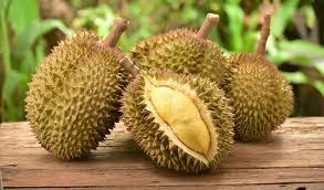 manfaat buah durian bagi kesehatan tubuh kamu