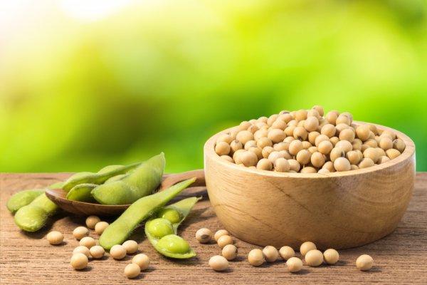 Manfaat Dari Kacang Kedelai Yang Jarang Diketahui Orang